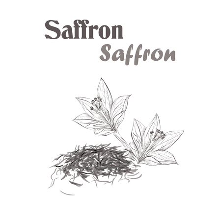 saffron spice. Sketch style vector illustration of saffron