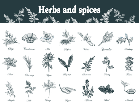 Herbs and spices set. Hand drawn officinale medicinal plants. Organic healing wild flowers. botanical illustrations. Engraving floral sketches