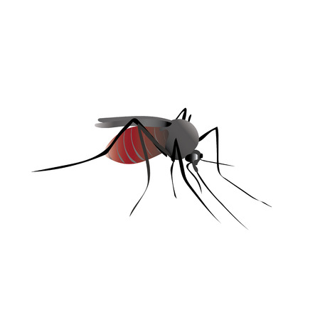 stomach bug: Mosquito insect with blood in the belly. Komar drank blood Illustration
