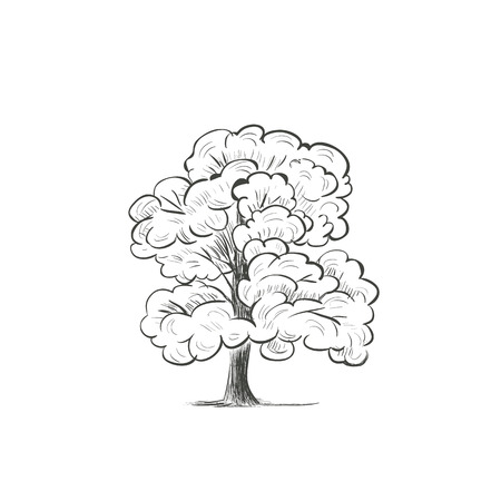willow tree: Willow tree sketch drawing vector illustration of a silhouette of a tree
