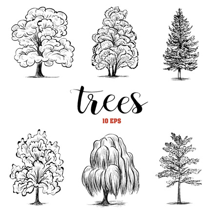 species: Set sketch trees. Collection trees are deciduous and coniferous species. Vector illustration