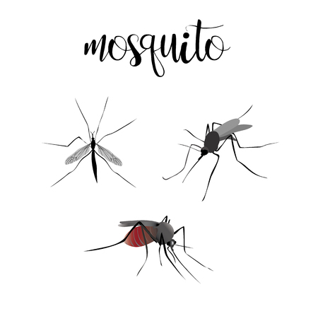 mosquitoes: Mosquitoes are blood sucking. Insects set vector mosquitoes collection