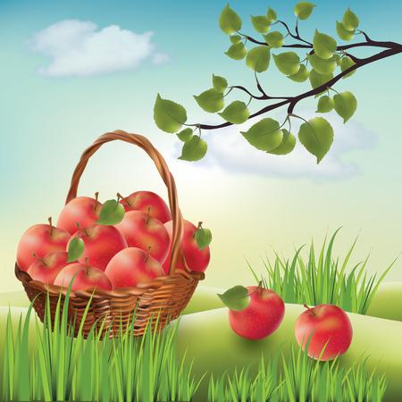 Basket with apples. Landscape lawn, apple tree. Illustration