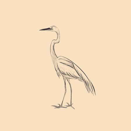 Heron is a sketch vector illustration. Hand sketch of heron design Çizim