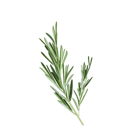Sprig of rosemary vector illustration. Rosemary herb Çizim