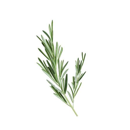 Sprig of rosemary vector illustration. Rosemary herb Stock Illustratie