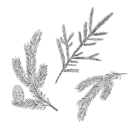 twigs: Spruce branch set. Collection of fir-tree vector illustration. Pine sketch