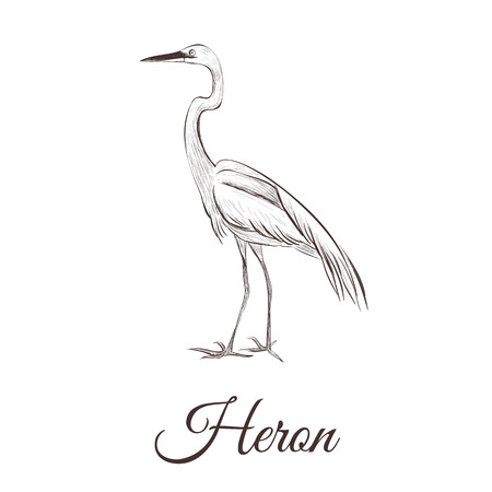 A heron is a sketch drawing. Bird series hand drawing heron vector illustration.
