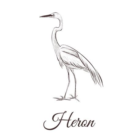 Een reiger is een tekening van een schets. Vogel serie hand tekening reiger vectorillustratie. Stock Illustratie