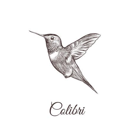 Hummingbird sketch hand drawing. colibri vector illustration of a bird Illustration