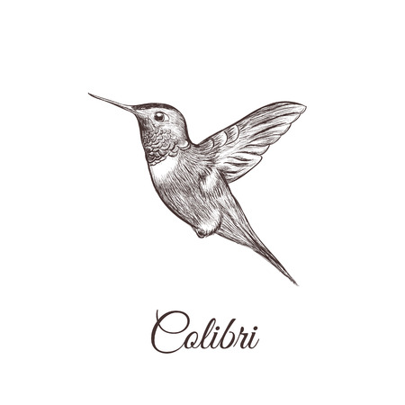 Hummingbird sketch hand drawing. colibri vector illustration of a bird Vettoriali