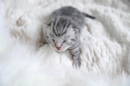 cute kitten is striped. Kitten baby purebred beautiful newborn Stock fotó - 89053914