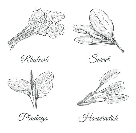 Set van planten schets.