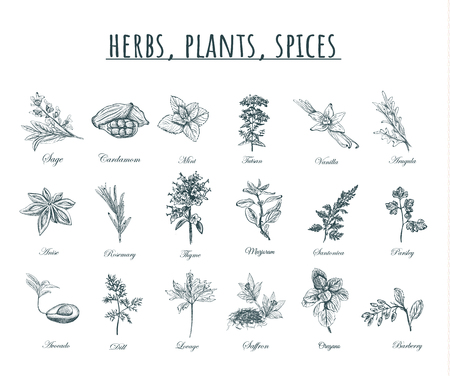 Herbs, plants and spices vector illustration. Herbs, plants, spices set. Organic healing herbs botanical spices,  plants sketches. Vettoriali