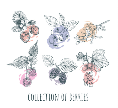 Berries set. Collection of berries. Berry sketch vector illustration.