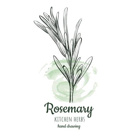 Rosemary schetsstijl