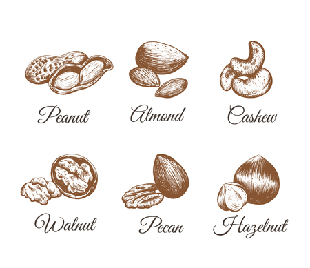 Nuts vector collection. Nuts Set sketch illustration
