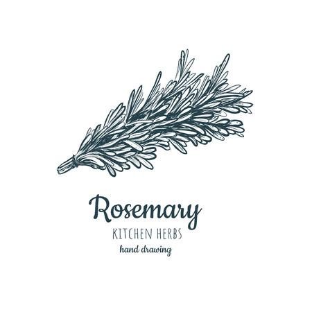 rosemary sketch style illustration for your design eps skech rosemary