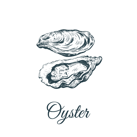 Oyster sketch vector illustration. oyster shell