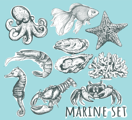 Marine animals collection. Hand drawing sea set