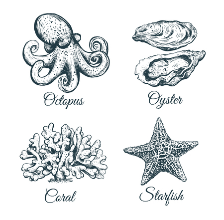 The Marine Set. Collection sketch Octopus, coral, oyster, starfish
