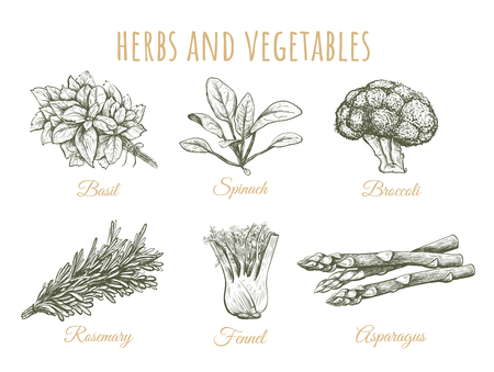 Herbs and vegetables sketch collection hand drawing. Vector illustration