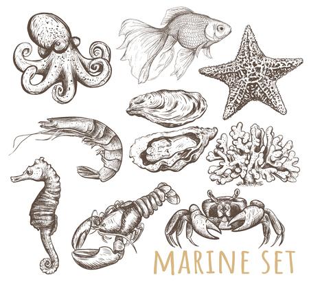 Marine animals collection illustration, drawing, vector. Marine set Illustration