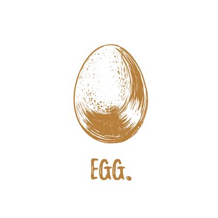 Egg vector illustration. Chicken Egg sketch hand drawing. Drawing for print, label, poultry farm. Ilustração