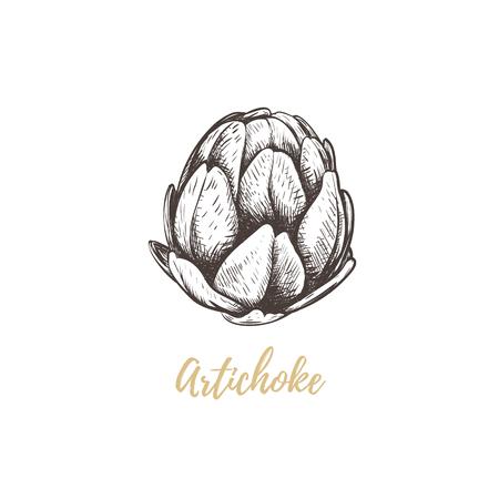 artichoke sketch hand drawing artichoke vector illustration