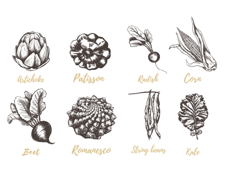 Set vegetables radishes, beets, beans, kale, romanesco, squash, corn, artichoke sketch. Vegetable collection hand drawing  illustration