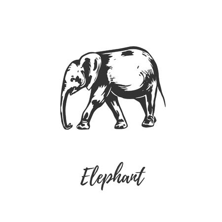 Elephant sketch illustration. Elephant hand drawing