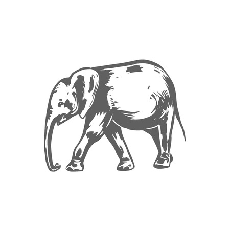 Elephant sketch illustration. Elephant hand drawing