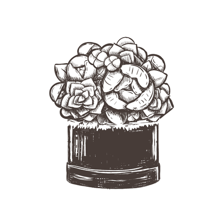 Bouquet of flowers in a box vector illustration. Flowers sketch hand drawing