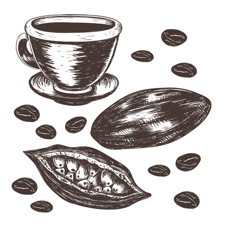 Cocoa beans, cocoa pod, cup of cocoa vector illustration.