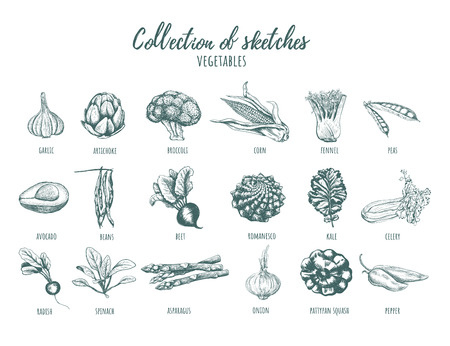 Collection of sketches of vegetables. Hand drawing. Set of vegetables vector illustration Imagens - 124064633