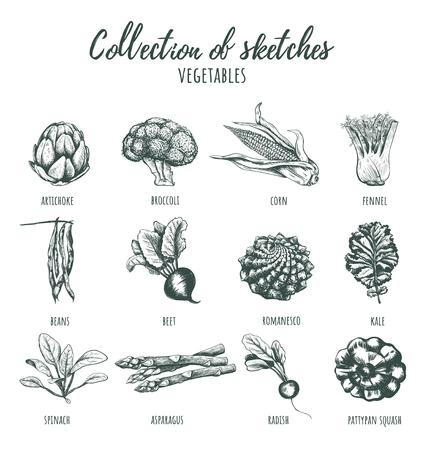 Collection of sketches of vegetables. Hand drawing. Set of vegetables illustration