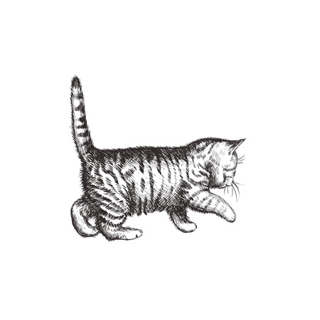 Kitten hand drawing illustration. Kitten sketch. Kitten walks Ilustracja
