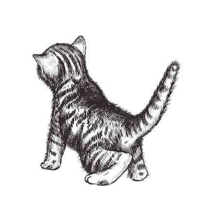 Kitten hand drawing illustration. Kitten sketch. Curious kitten