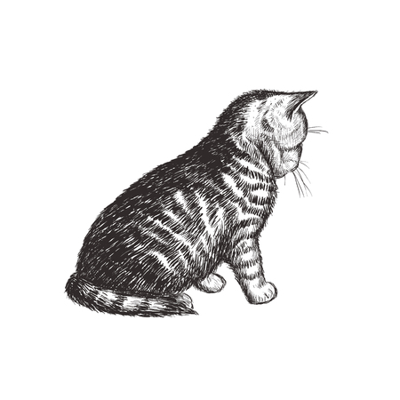 The kitten is sitting. Cat sketch hand drawing. Kitty Vector Illustration Ilustracja