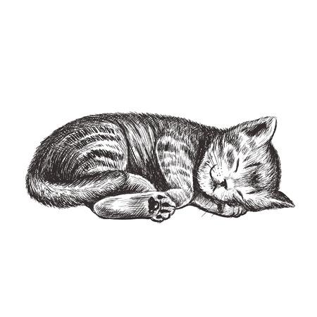 The kitten is sleeping. Kitty hand drawing. Illustration