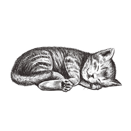 The kitten is sleeping. Kitty hand drawing. Ilustracja