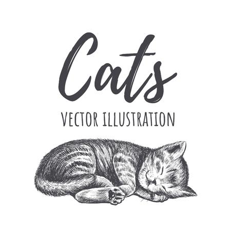 Kitten sleeps vector illustration. Kitty hand drawing. The cat is sleeping