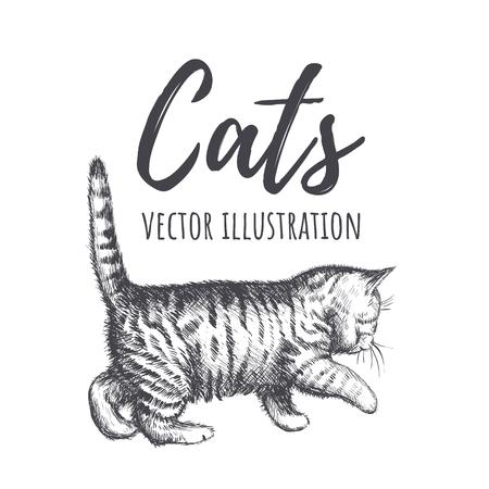 Kitten walks illustration. Kitten sneaks, cat silhouette, tabby cat.