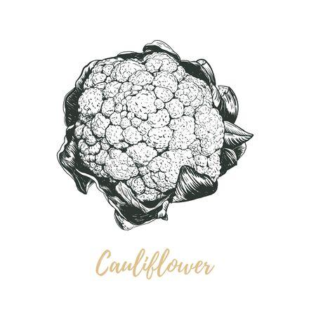 Illustration vectorielle de chou-fleur. Dessin de main de croquis de chou-fleur. L'art du chou-fleur