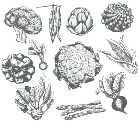 Vegetables collection sketch vector illustration. Vegetables set corn, broccoli, beets, asparagus, beans, romanesco, artichoke, cauliflower, kohlrabi, radish, squash, patisson, asparagus