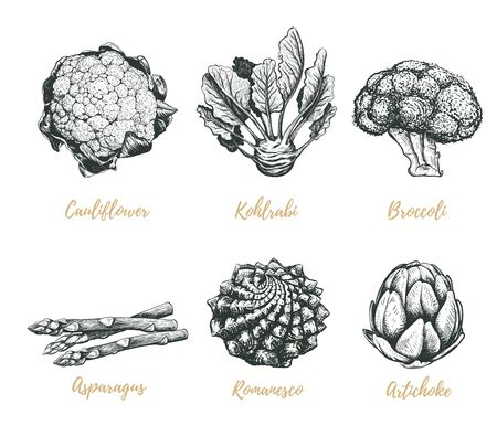 Vegetables collection vector illustration. Vegetables sketch drawing.