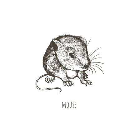 Mouse vector illustration.