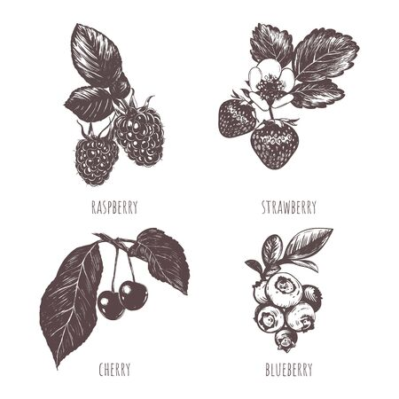 Collection of berries sketch hand drawing.