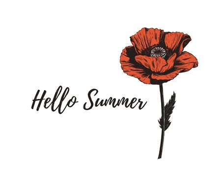 Hello Summer lettering with poppy flower.