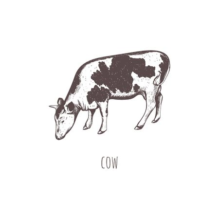 cow sketch vector illustration. Cow hand drawing Ilustrace